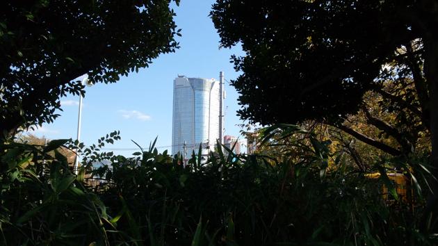 青山霊園からの六本木ヒルズ森タワー