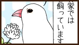 WEB漫画かぴぐらし「実家の文鳥しーちゃんが凄い」